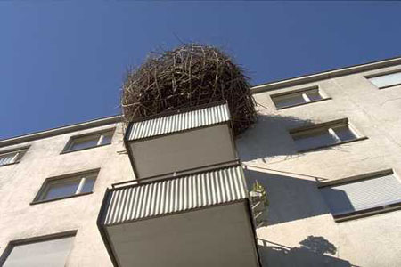 nest1.jpg
