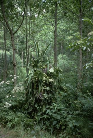 treemansuper.jpg